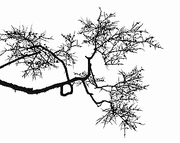 branch-2.png